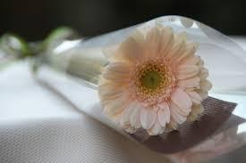 花束ちあき