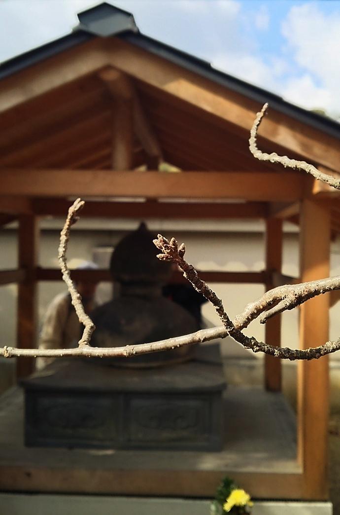 190122座禅 (3)