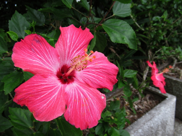 190108沖縄 (123)