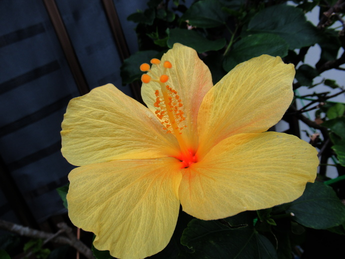 190108沖縄 (127)