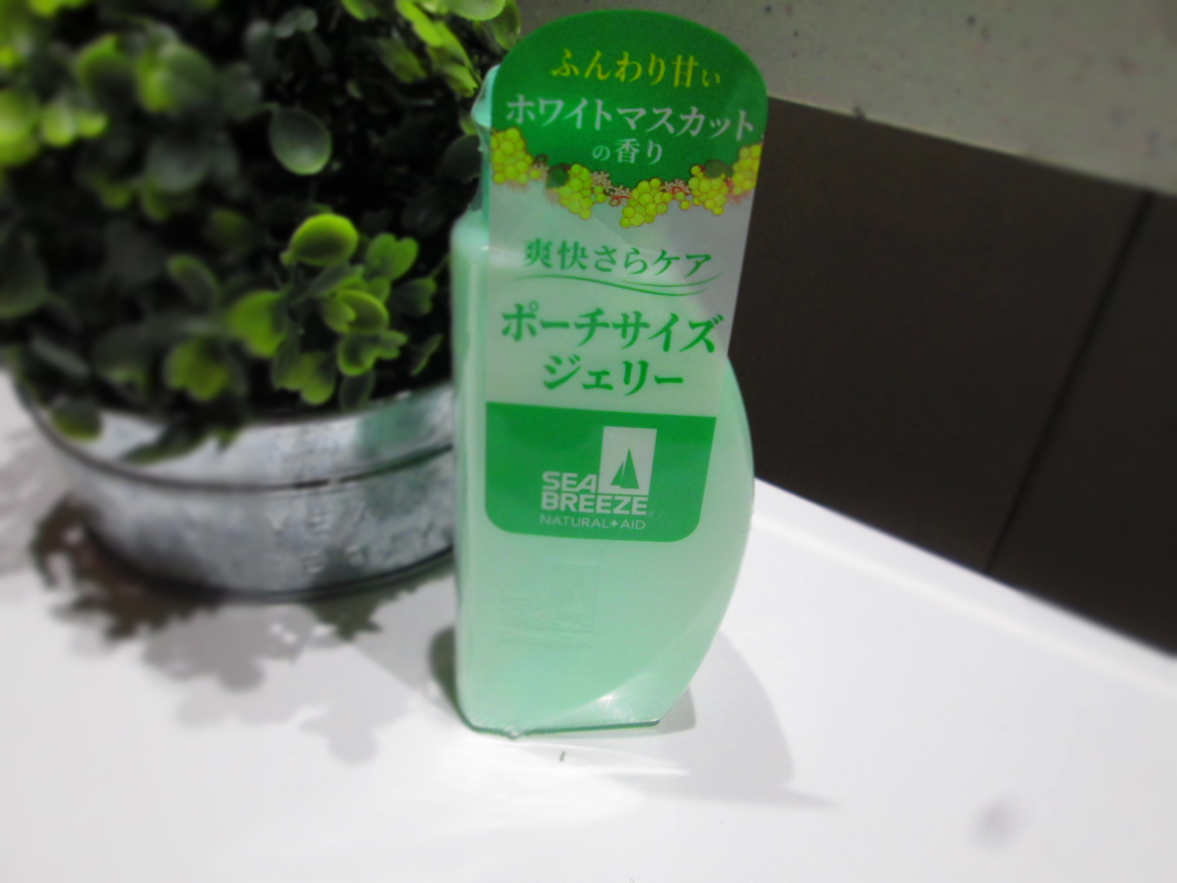 IMG_6756 シーブリ (10)