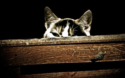 猫 様子見