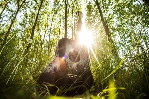 野生のギター