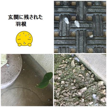 page1511x4moji.jpg