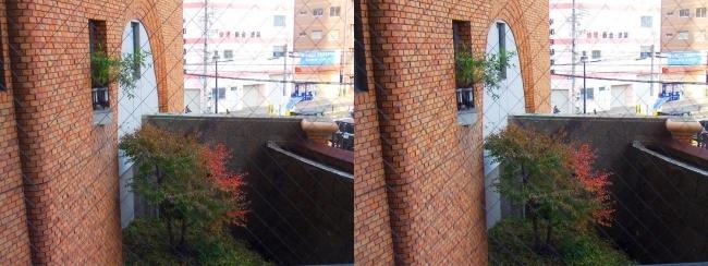 硝子の城 玄関前廊下窓からの中庭の紅葉(平行法)