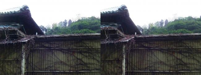 城崎温泉 旅館まつや202号室 雨の朝の風景(交差法)