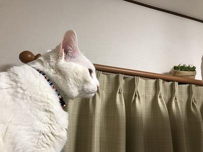 猫草とソウル 004
