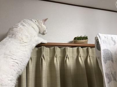 猫草とソウル 003
