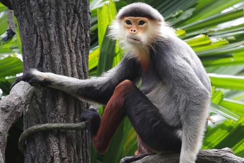 4万5000年前の人類祖先、サルとリスをめっちゃ食ってたことが判明