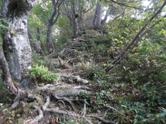 稜線のブナの道
