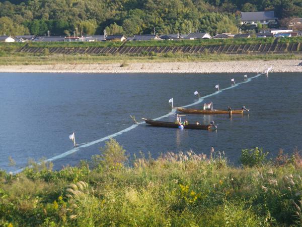 瀬張り網漁鵜飼大橋上流