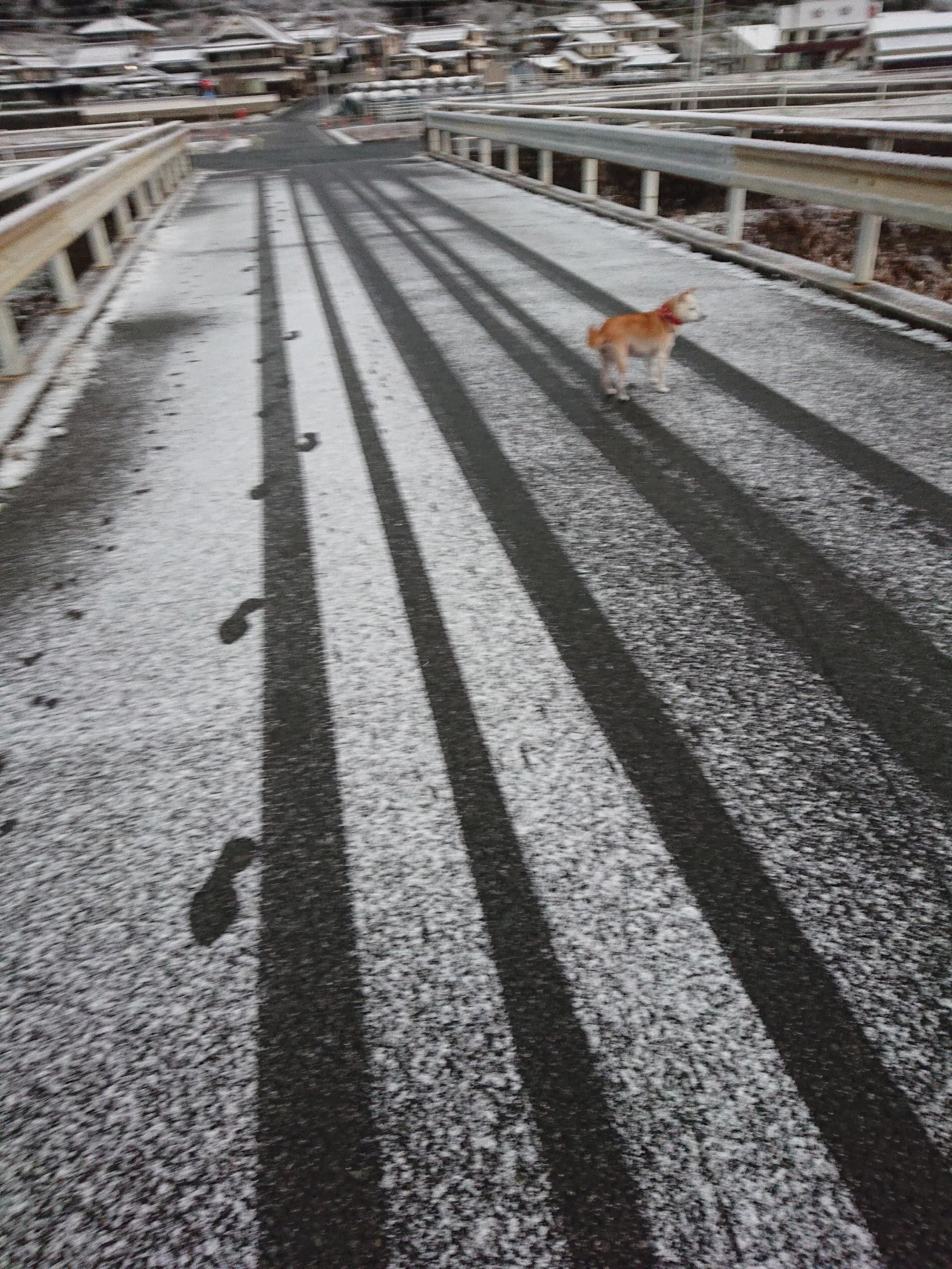 12月28日の雪_181228_0027