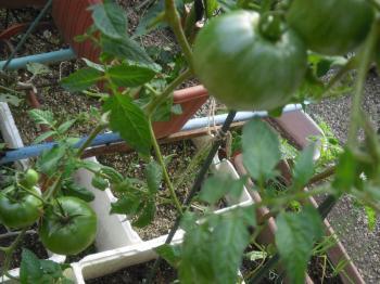 2-11トマト