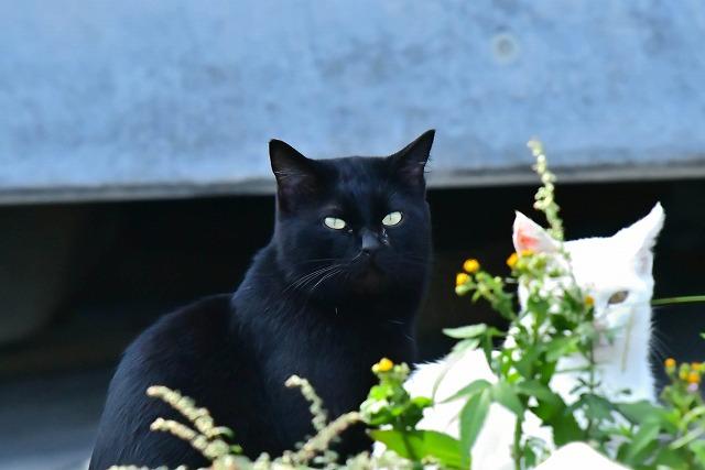 黒猫ちゃん親猫と子猫