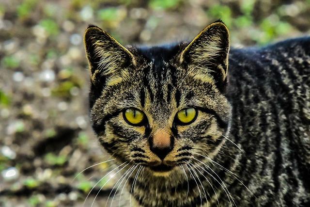 遠征先でも美猫発見