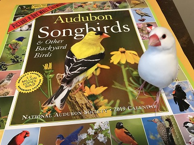 songbird201901.jpg