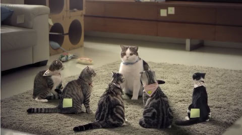 COTTOSTUDIO_gangstercats1