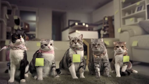 COTTOSTUDIO_gangstercats3
