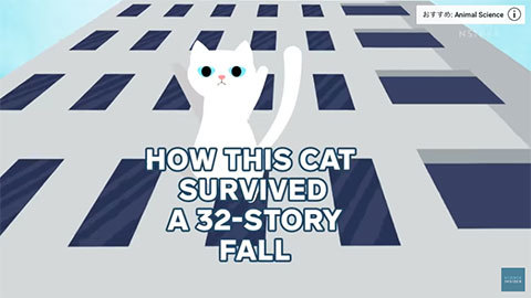 HowThisCatSurvivedA32-StoryFall_1