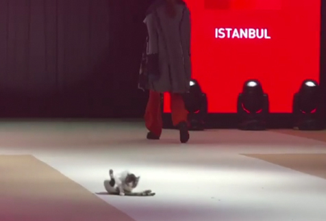 Istanbul_catwalkcat1