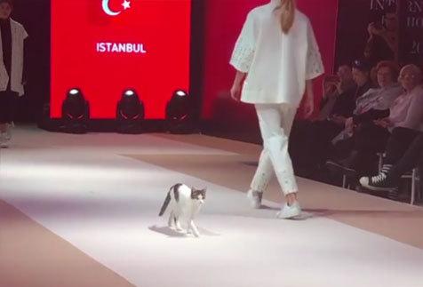 Istanbul_catwalkcat4