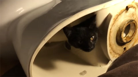 Kitten+AmericanStandardtoilet1