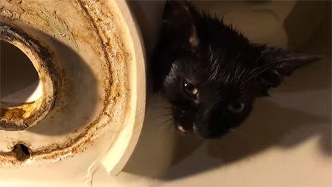 Kitten+AmericanStandardtoilet8