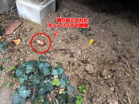 garden1_011219
