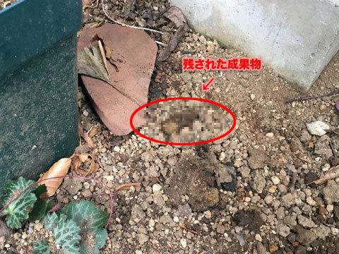 garden2_011219