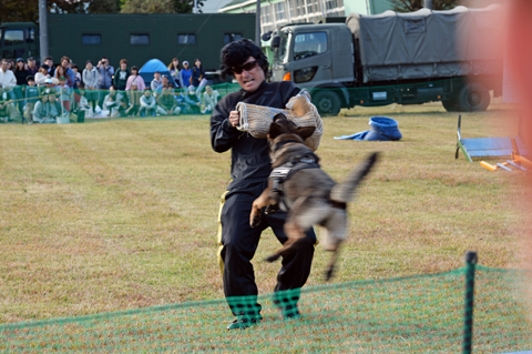 guarddog4_110418