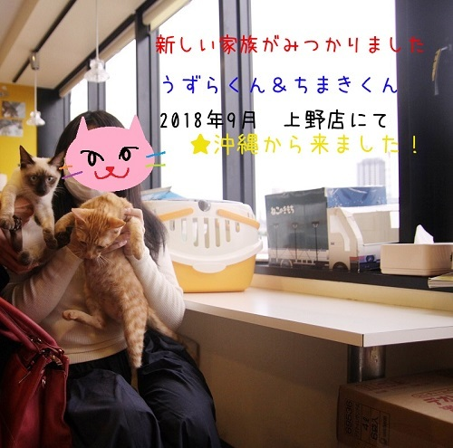 うずら・ちまき20180929