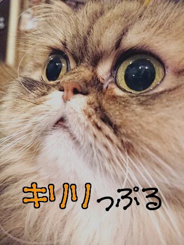 ぷるぷる20190212-01