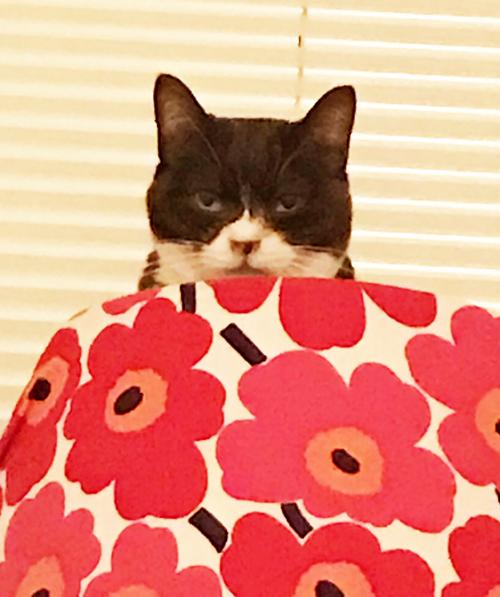 にゃんコム?工事現場を監督する猫