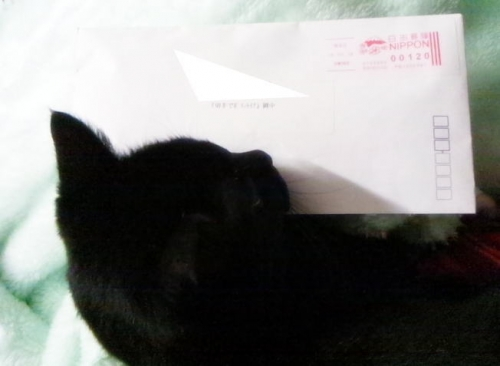 c190218切手