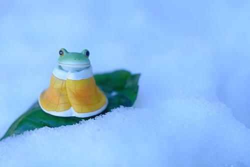 ツバキアキラが撮ったカエルのコポー。寒いので布団にくるまったまま、葉っぱのソリで遊んでいるコポタロウ。
