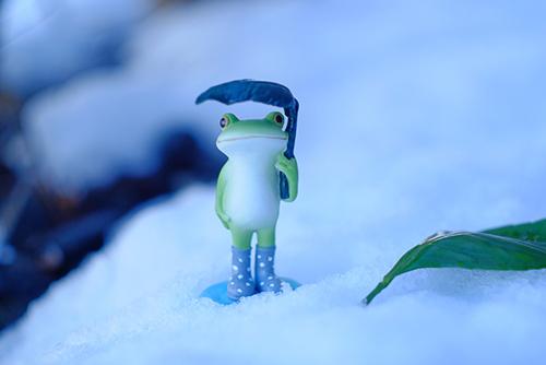 ツバキアキラが撮ったカエルのコポー。雪の中で、葉っぱのカサをさしているコポタロウ。