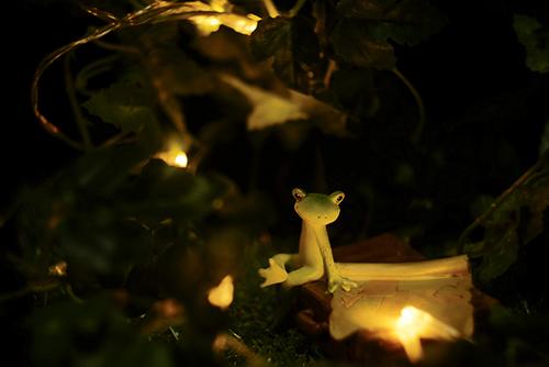 ツバキアキラが撮ったカエルのコポー。夜の小さな灯りで、明日の道のりを確認する旅の途中のコポタロウ。