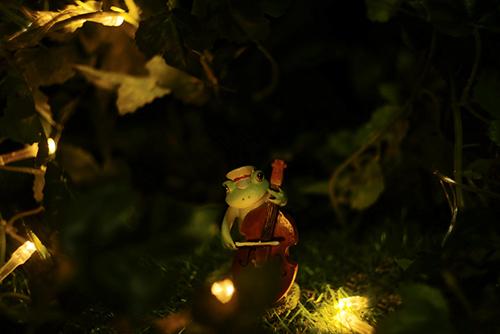 ツバキアキラが撮ったカエルのコポー。夜のともし火の中で、コントラバスを奏でるコポタロウ。