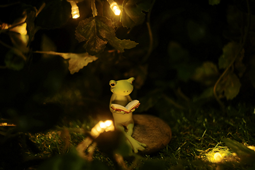 ツバキアキラが撮ったカエルのコポー。夜眠る前、小さな明かりで、本を読んでいるコポタロウ。