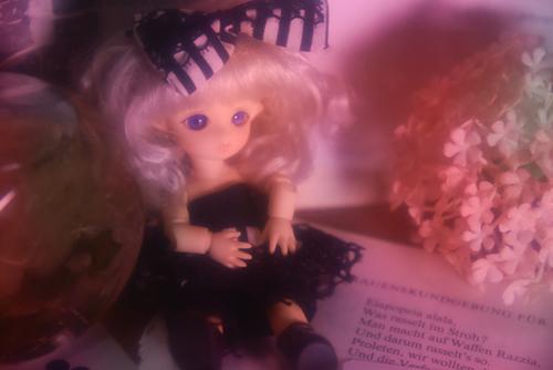 BrownieのMomoちゃん、セクシーなお洋服で、オーロラ色のセロハンをかざして写真を撮ったら、セクシー度がアップしました。