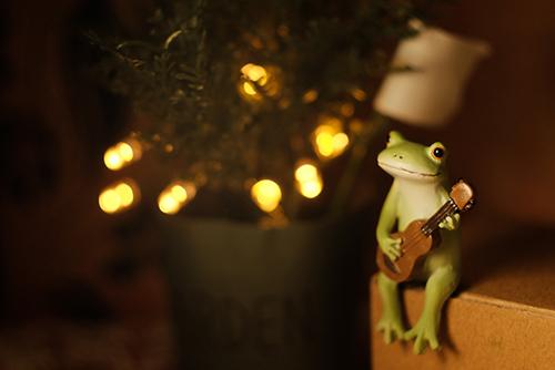 ツバキアキラが撮ったカエルのコポー。キラキラ鉢植えのそばで、ウクレレを弾いているコポタロウ。
