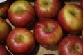 弘前リンゴ1