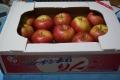 弘前リンゴ