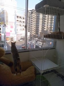 猫カフェニャンズ 仮入居中(1)