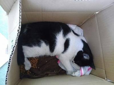 遺棄された猫