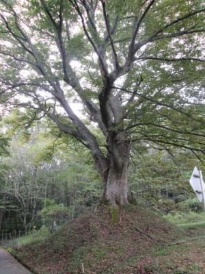 IMG_6478榎
