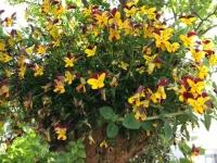 GW庭の花