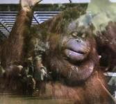 スケッチ会猿