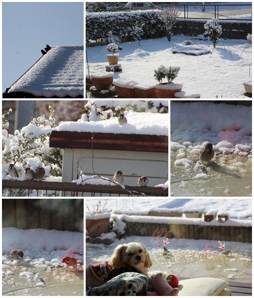 2019 2月10日 雪すずめ①