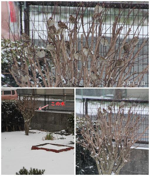 2019 2月11日 雪すずめ①